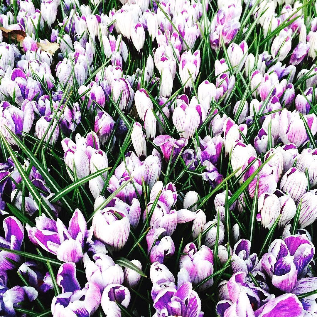 Spring Flowers Colours London Sunday Evening Canarywharf