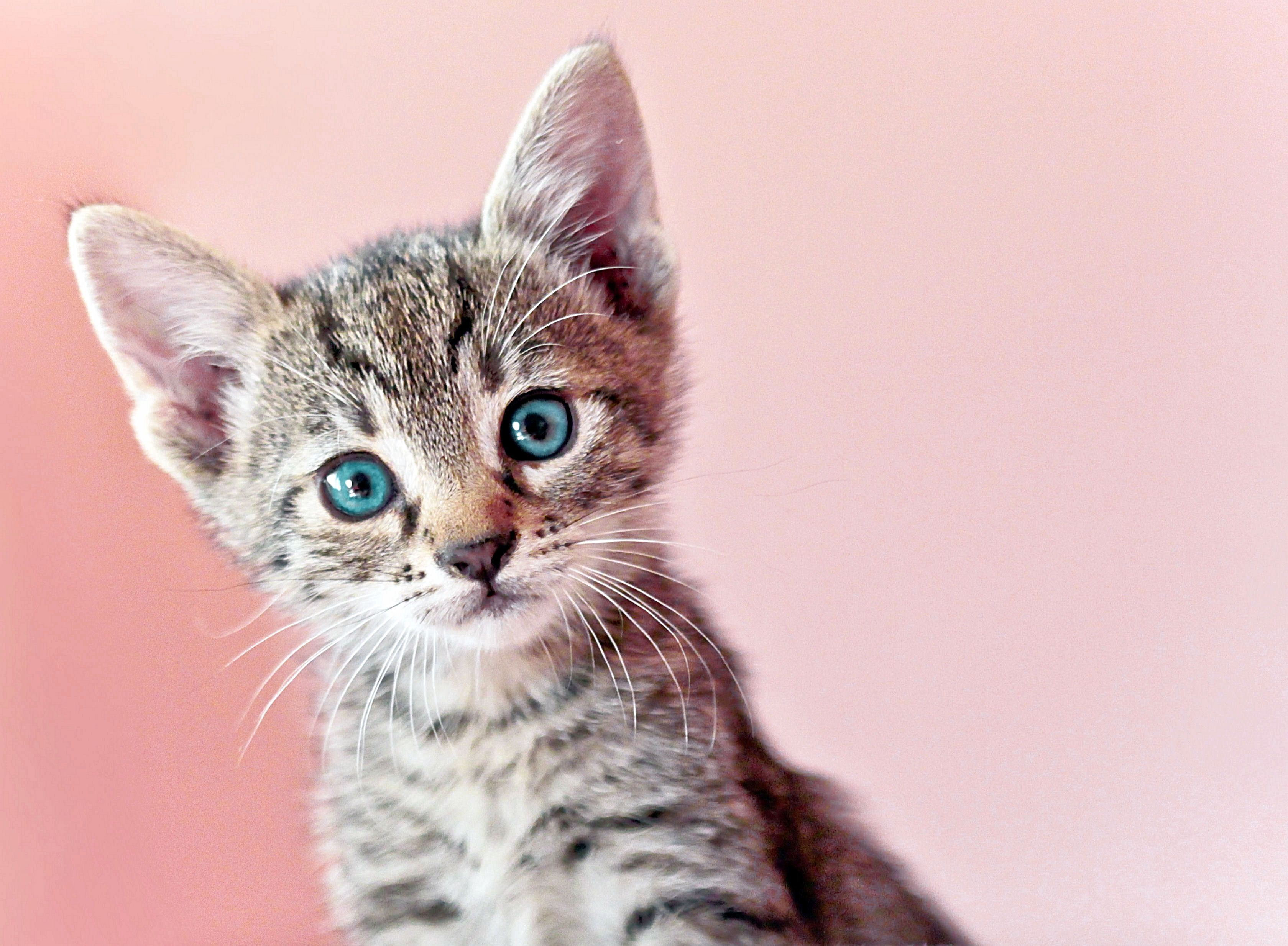 You Have To See The 100 Years Of Kitten Beauty Video Cute Baby Animals Kittens Cutest Kittens And Puppies
