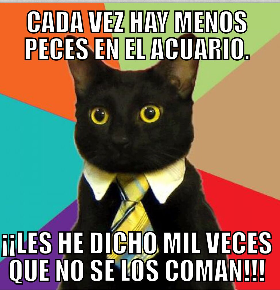 Business Cat Meme In Spanish Loose Translation Every Time I Look There Are Less Fish In The Aquarium I Hav Business Cat Meme Funny Cat Memes Business Cat