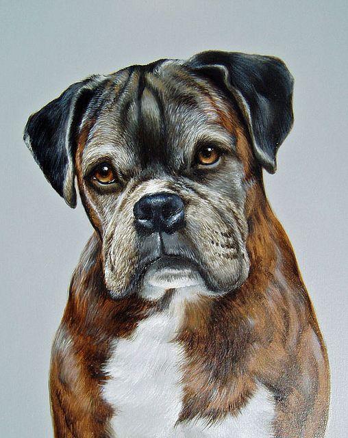 Boxer Dog Dog Portraits Canine Art Pitbull Art