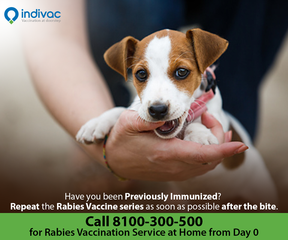 Pin On Rabies Vaccination