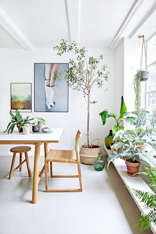 Bananenplant home woonkamer livingroom décoration intérieure pinterest plantes déco scandinave et décoration intérieure