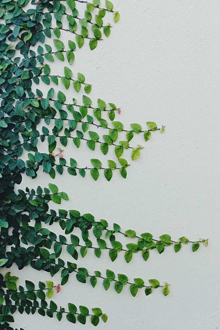 Climbing vines for walls - Climbing Vines Garden Greenery Simplistic