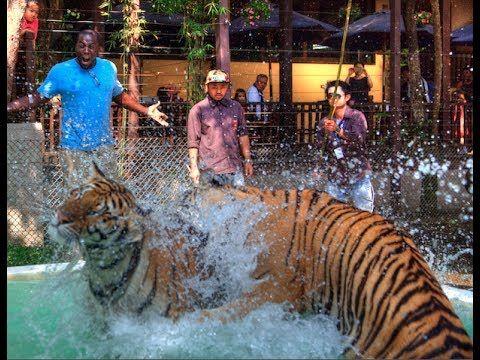 Top Things To Do In Thailand Tourist Guide Bangkok Chiang Mai