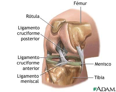 Artroscopia de rodilla: Anatomía normal | Anatomía | Pinterest ...
