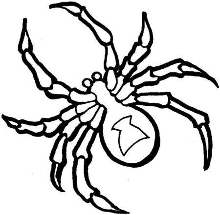 Gran Tarántula | moldes lampras de pvc | Coloring pages, Spider ...