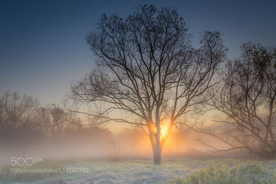 Foggy withered tree in winter by kg_2011 #nature