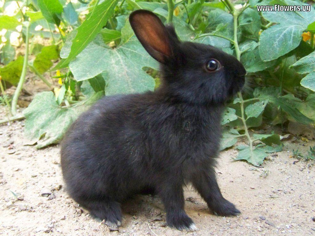 I had a black bunny rabbit named Lulu when I was a kid ...