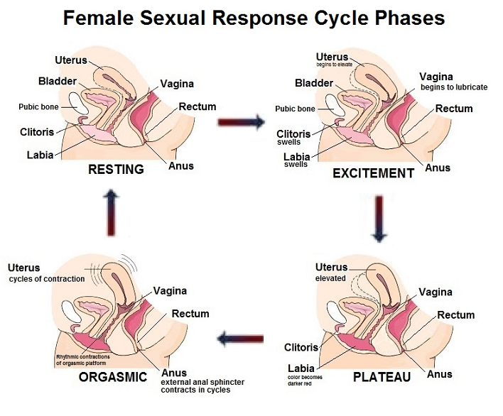 Erogenous zones for women and how to use them