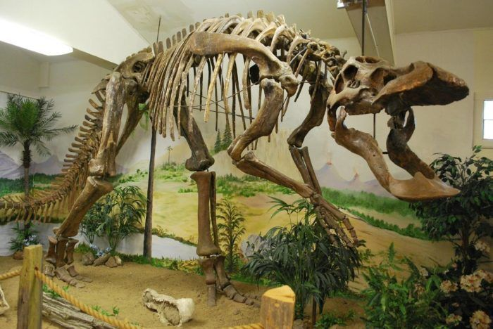 Here Are The 5 Must-See Montana Museums For Dinosaur Lovers #historyofdinosaurs Here Are The 5 Must-See Montana Museums For Dinosaur Lovers #historyofdinosaurs Here Are The 5 Must-See Montana Museums For Dinosaur Lovers #historyofdinosaurs Here Are The 5 Must-See Montana Museums For Dinosaur Lovers #historyofdinosaurs