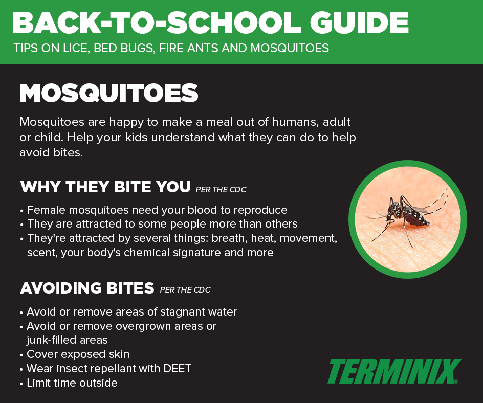 Mosquito Control Mosquito Extermination & Removal (With