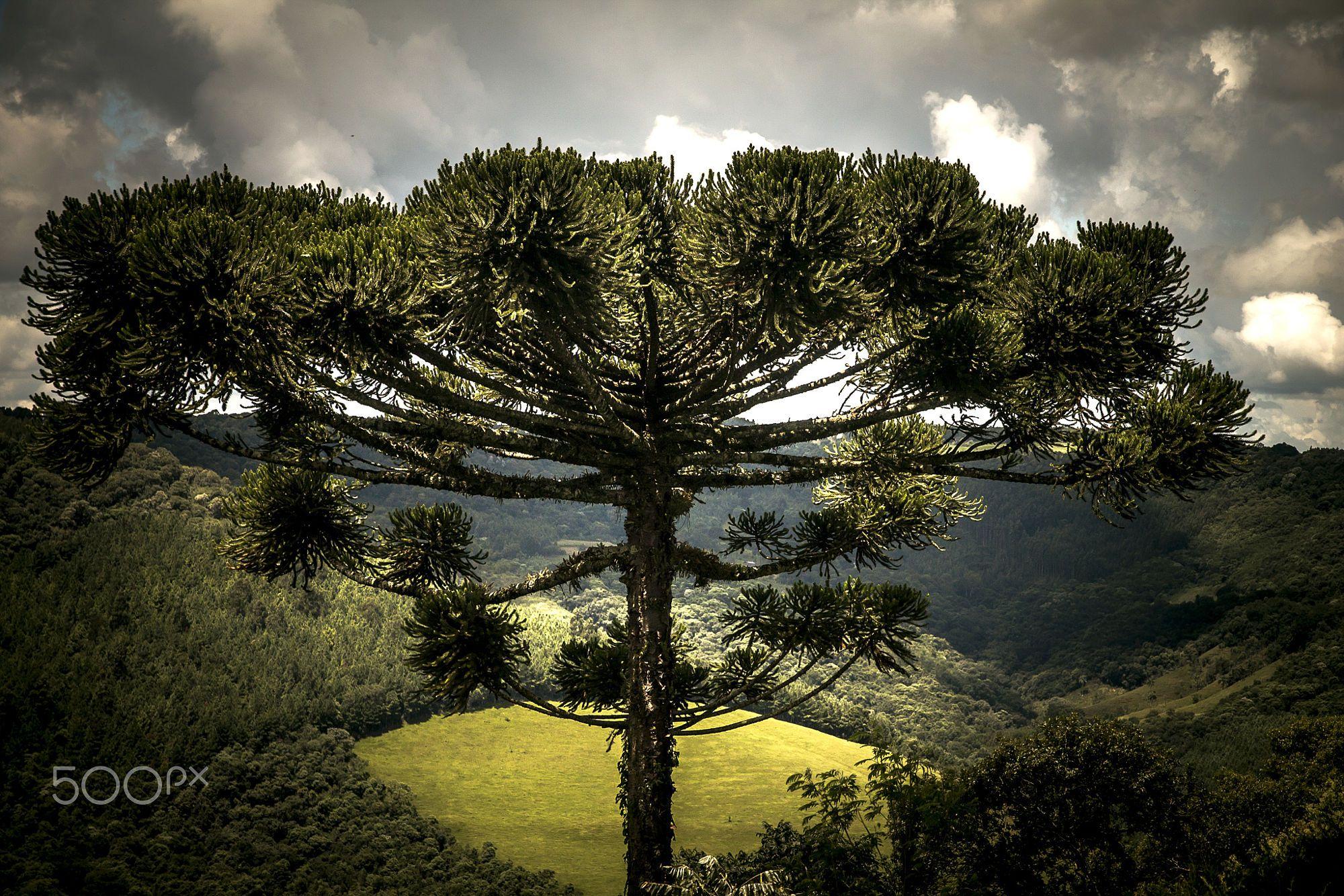 Natureza -