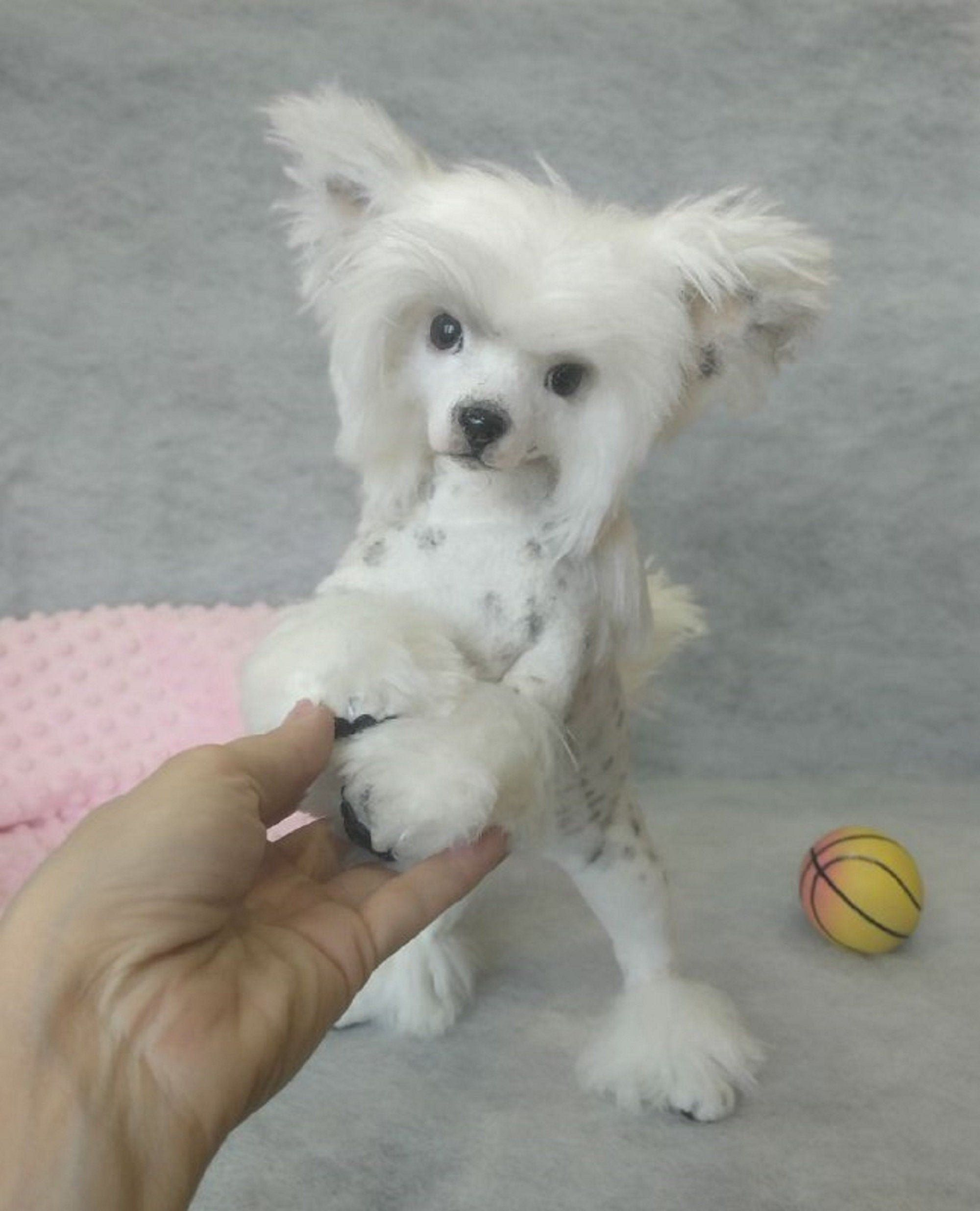 Chinese Crested Dog Sold Puppy Made Of