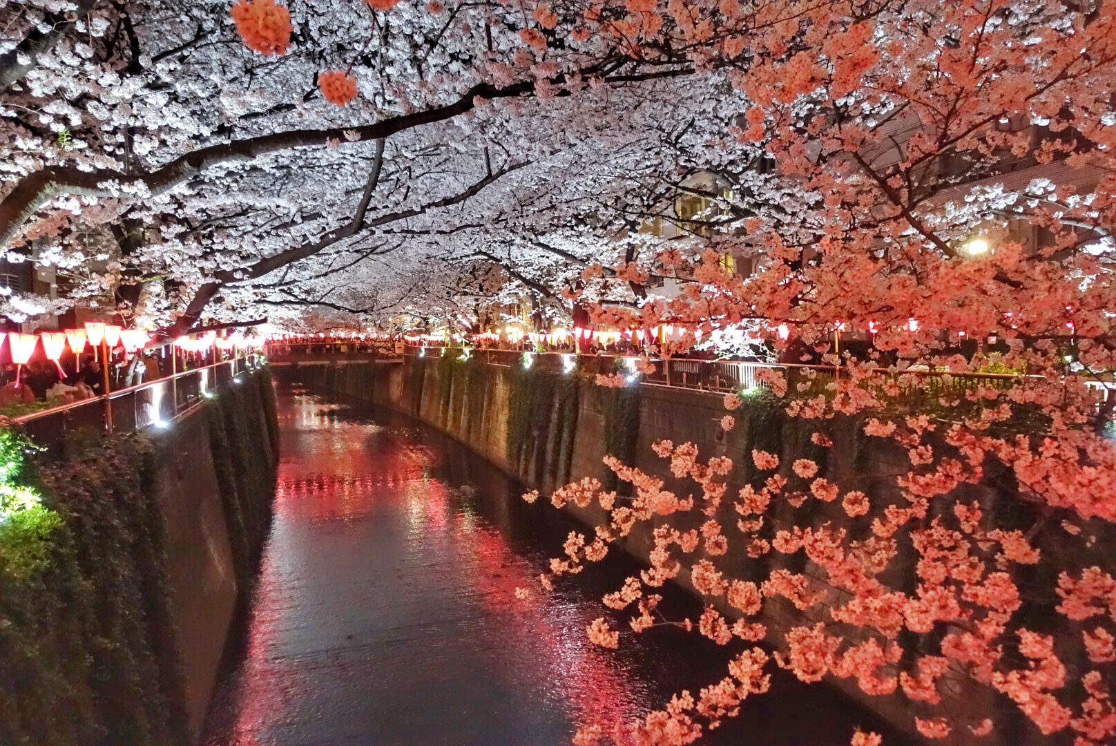 Japan Cherry Blossoms Lit Up At Night In Naka Meguro Tokyo For Yozakura Beautiful Sakura At Night Discover The Best Thin Aesthetic Japan Travel Japan Travel