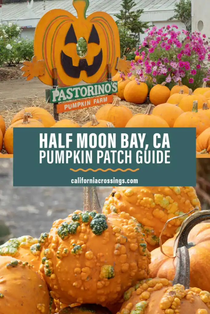 Find The Best Pumpkin Patches In The San Francisco Bay Area And Half Moon Bay California Fall Fe In 2020 Pumpkin Patch Northern California Travel Best Pumpkin Patches
