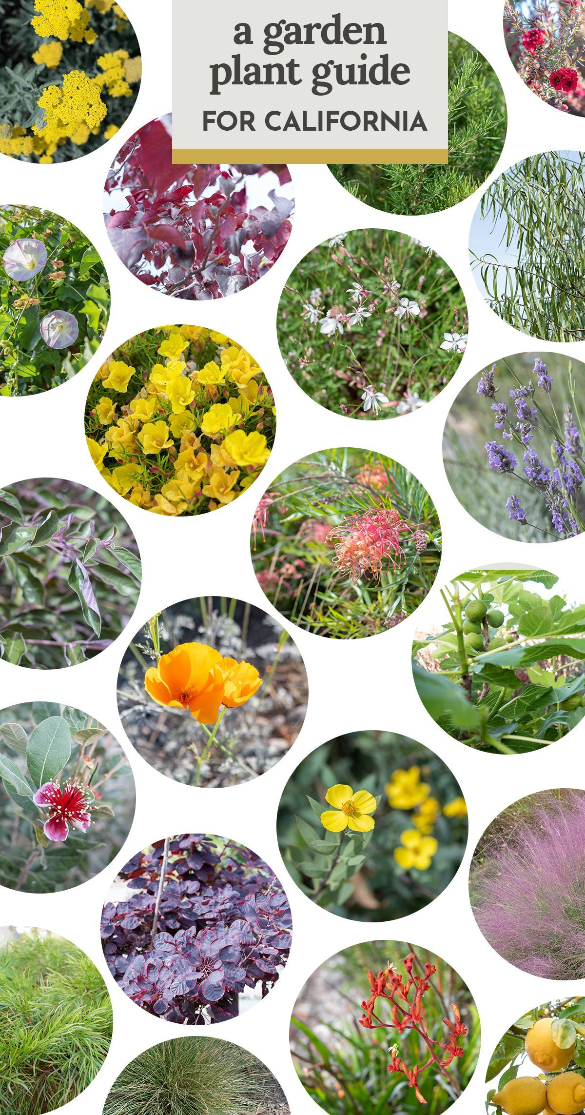 69be8c487196ee0becf77b4e791b1e96 - Care And Maintenance Of Southern California Native Plant Gardens