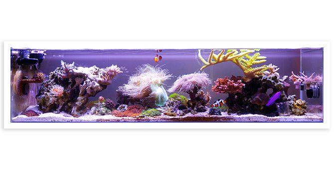 Holy Carp S 12 Gallon Nano Aquarium Featured Aquarium Reef Tank Nano Aquarium Aquarium