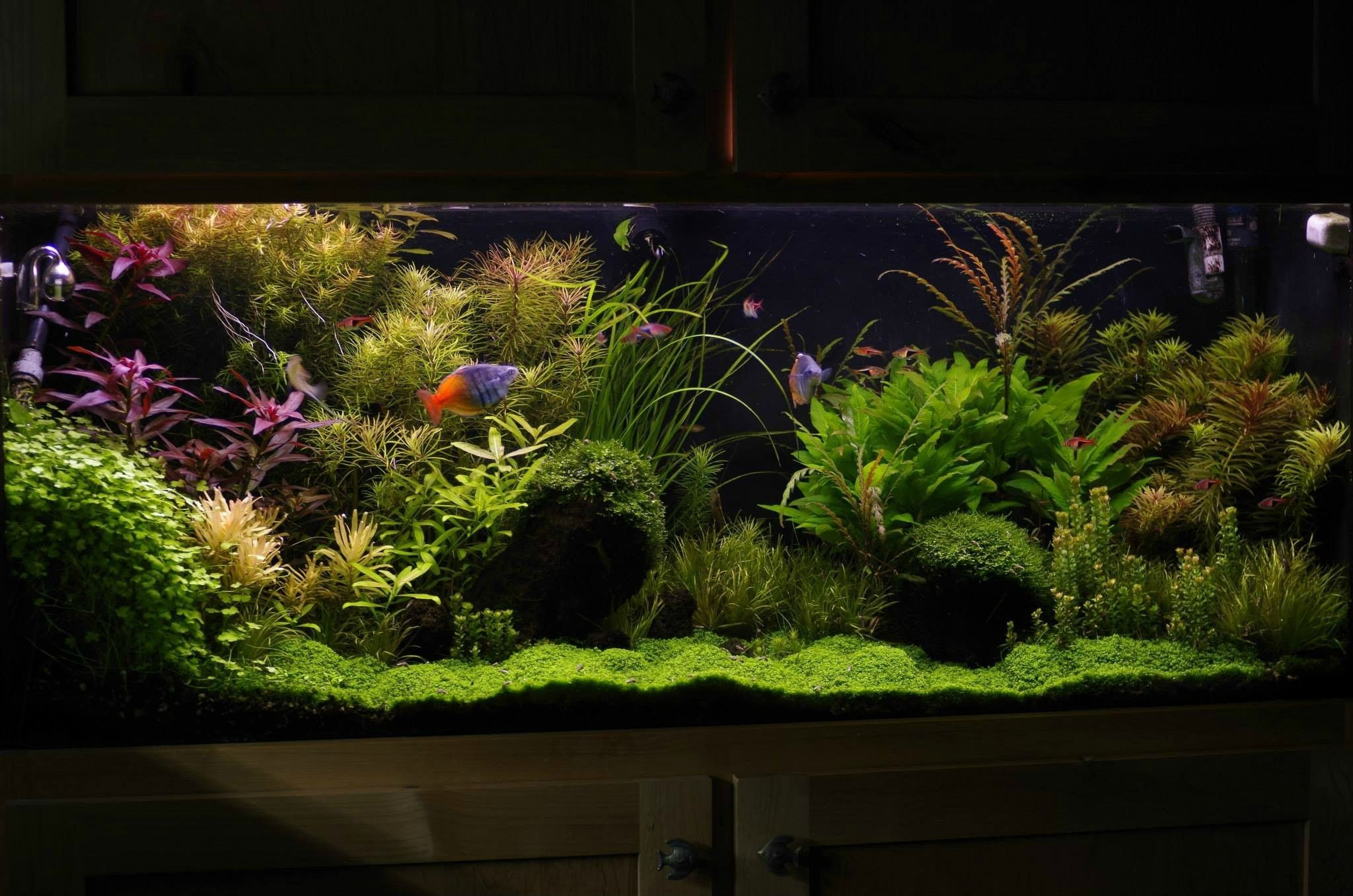 Have you ever seen a nice looking 55 gallon page 4 for Plant fish tank