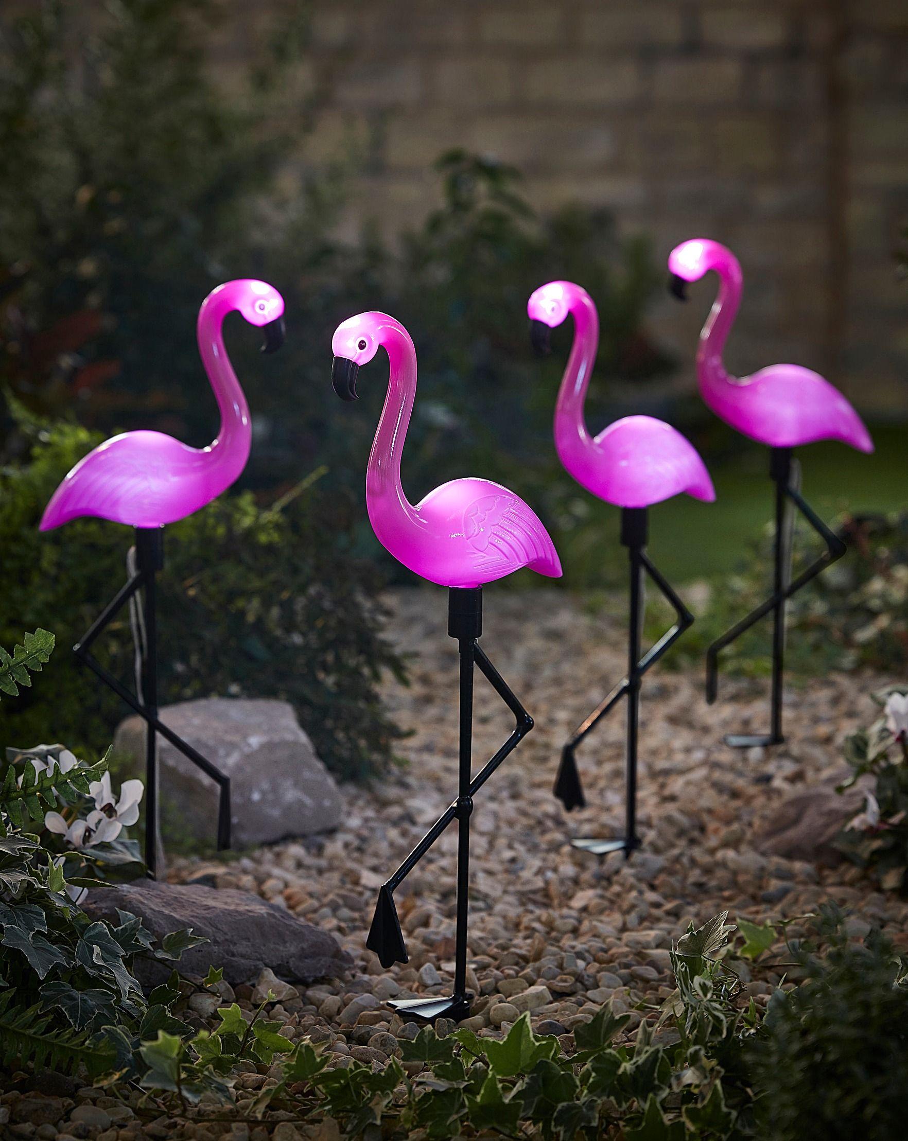 birthday flamingo meme