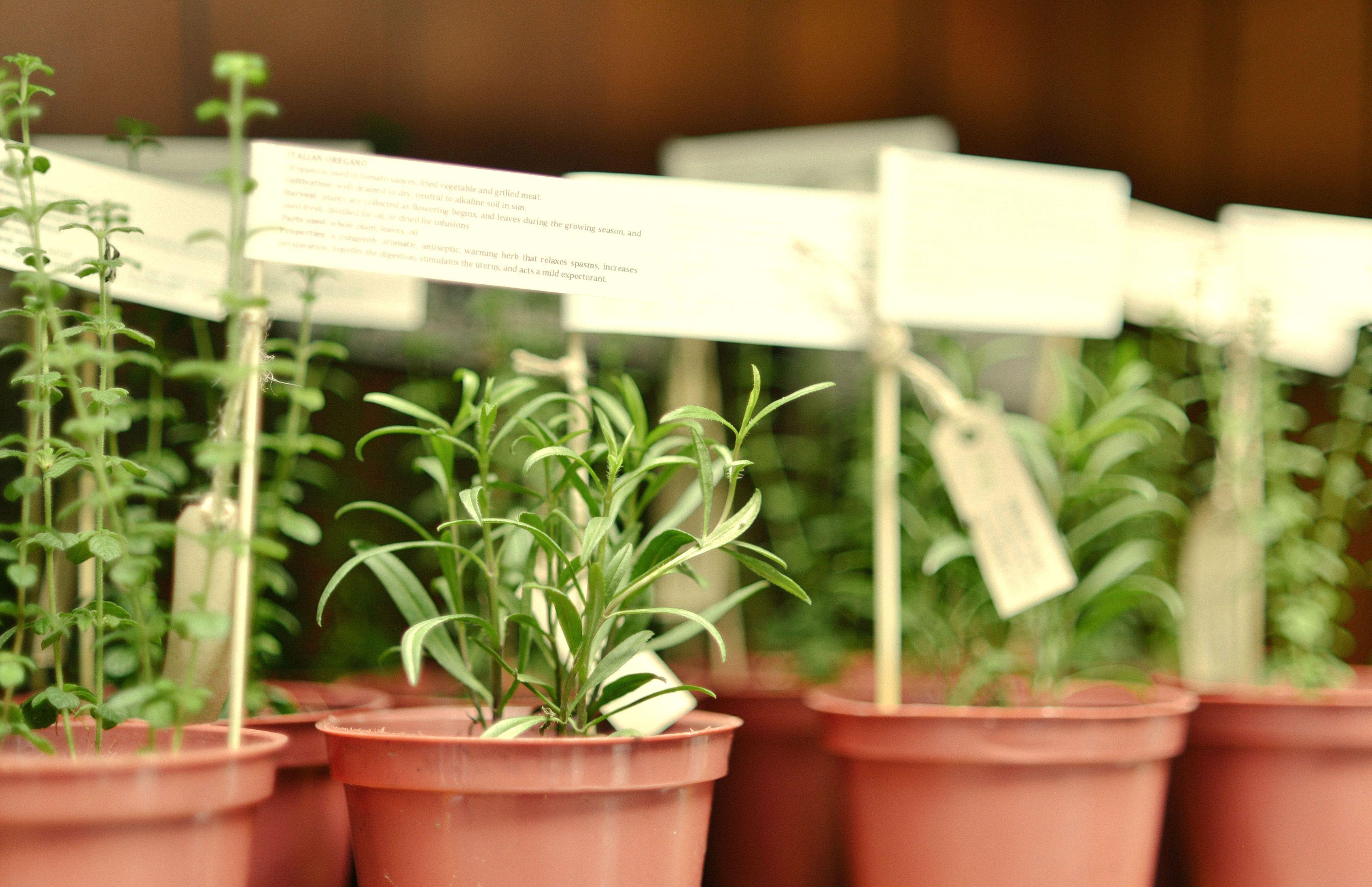 Un souvenir genial hierbas aromaticas para que los - Plantas aromaticas en la cocina ...