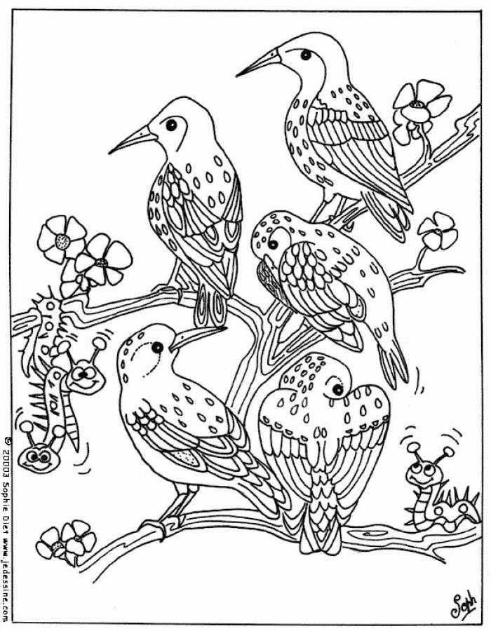 Dibujo para colorear : unos pájaros | colorear | Pinterest ...
