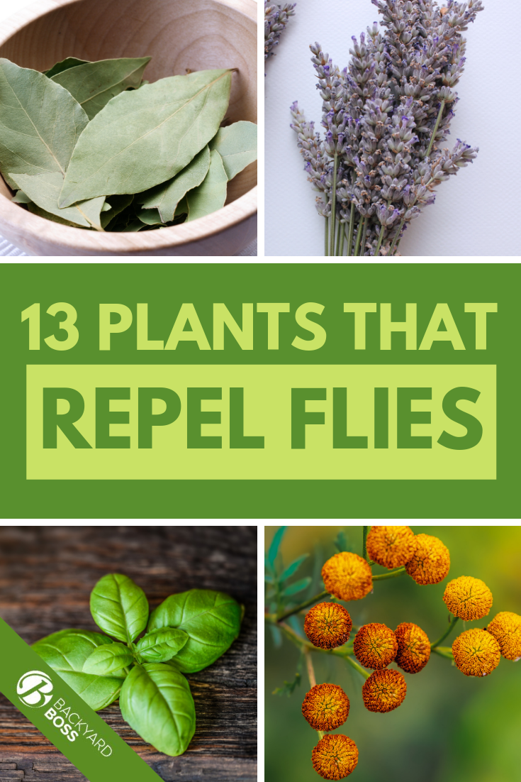 13 Plants That Repel Flies #mosquitoplants