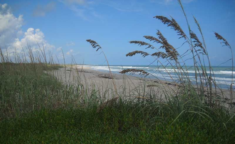 Sea Oats Line 5 Miles Of Wild Beach At Hobe Sound National Wildlife Refuge