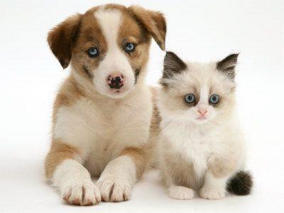 cute baby puppies cute