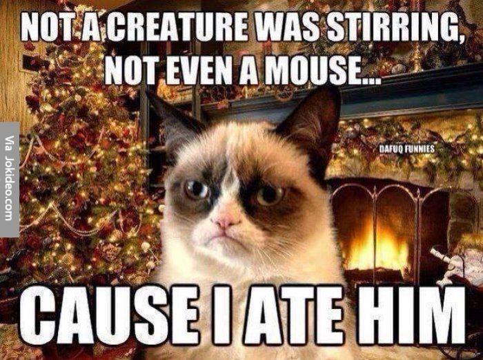 Funny christmas grumpy cat meme | Funny Dirty Adult Jokes, Memes ...
