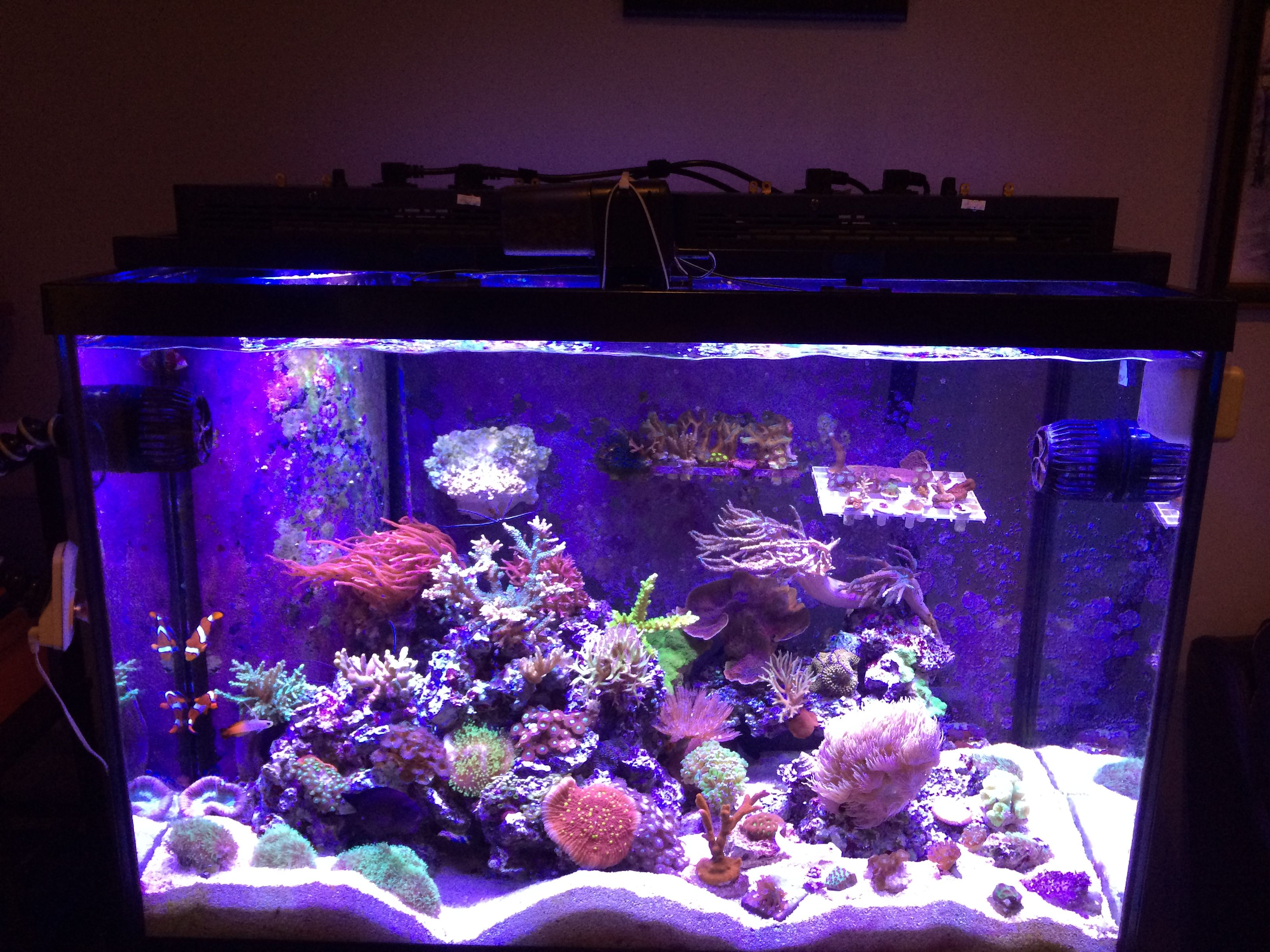 for aquarium o gallon lighting forums tank led forum the planted