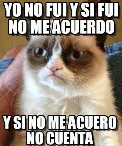 Gato Grunon Grumpy Cat Quotes Meme Grumpy Cat Grumpy Cat