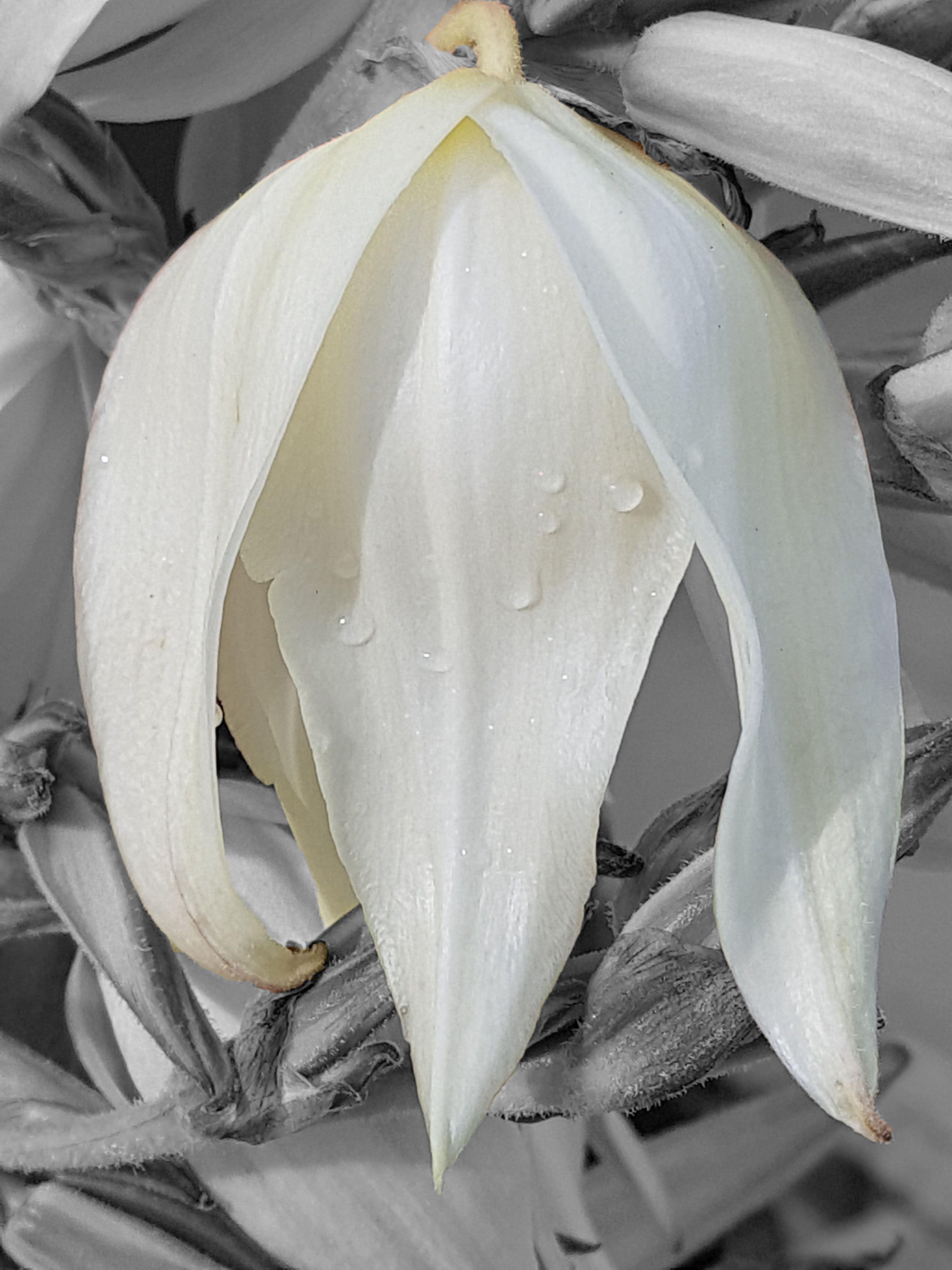 Fleur D Acacia En 2020 Instagram Acacia Fleurs