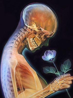 Morgan Davidson   Spell\'s Inspiration   Pinterest   Anatomía ...