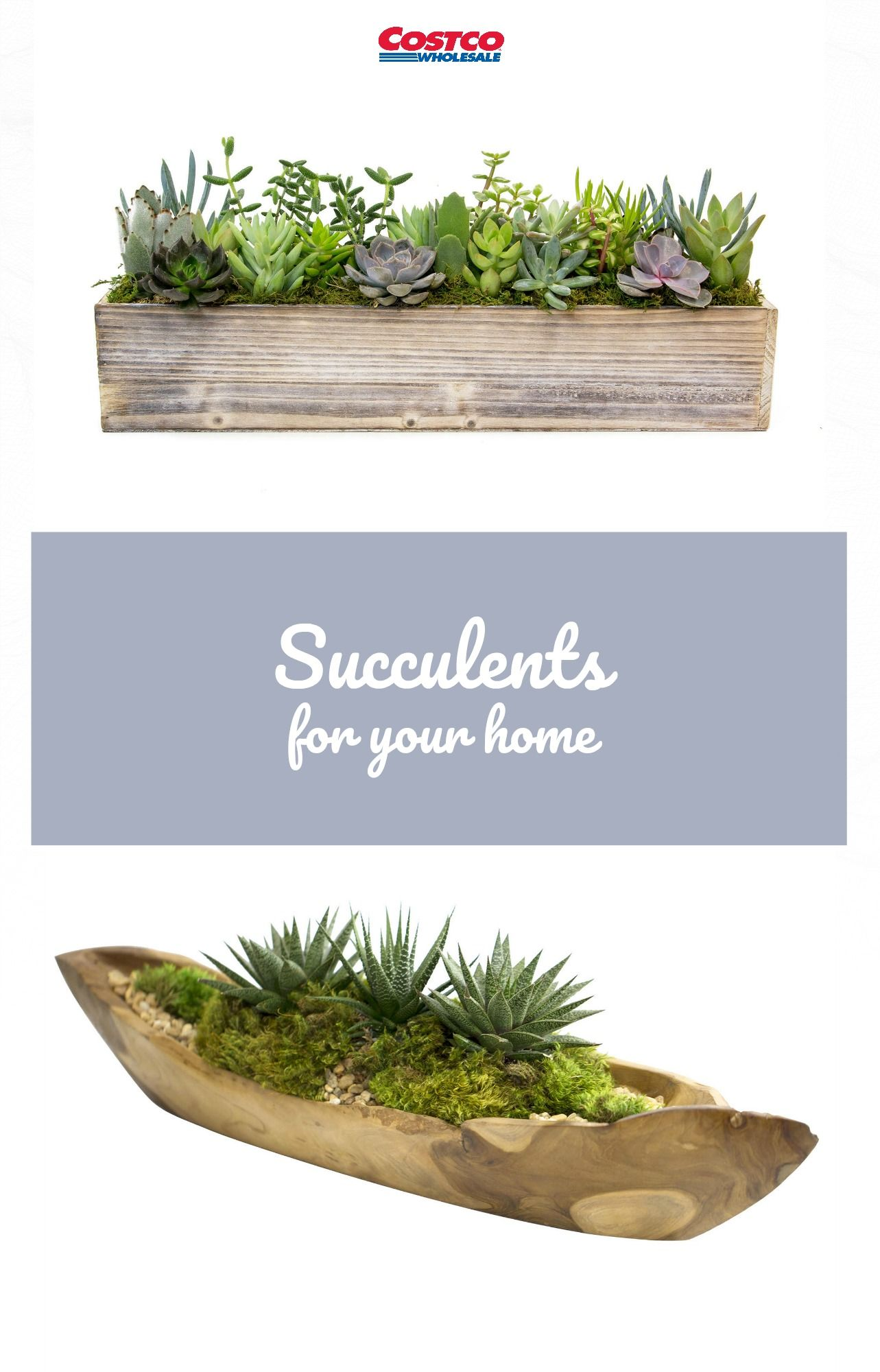 Add Some Green To Your Home With A Succulent Garden From 400 x 300