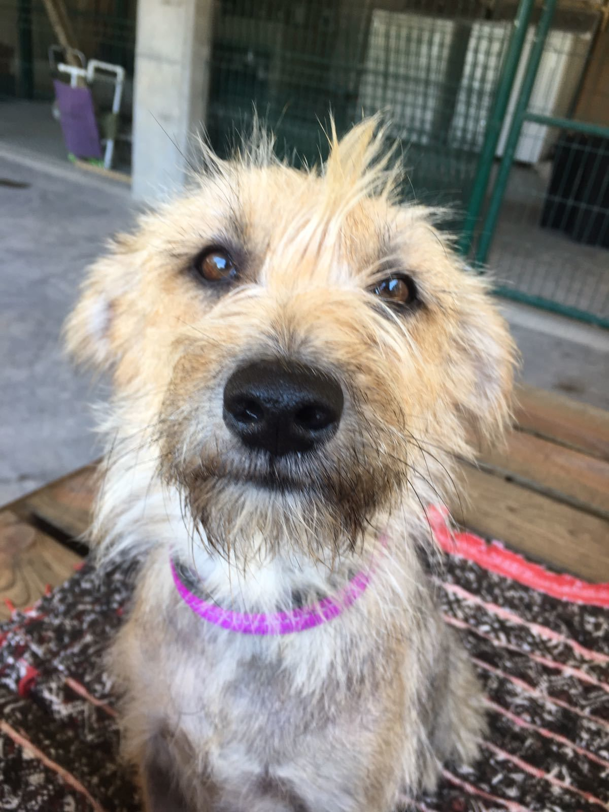 Adopt Ella On Petfinder Terrier Mix Dogs Animal Rescue Doggy