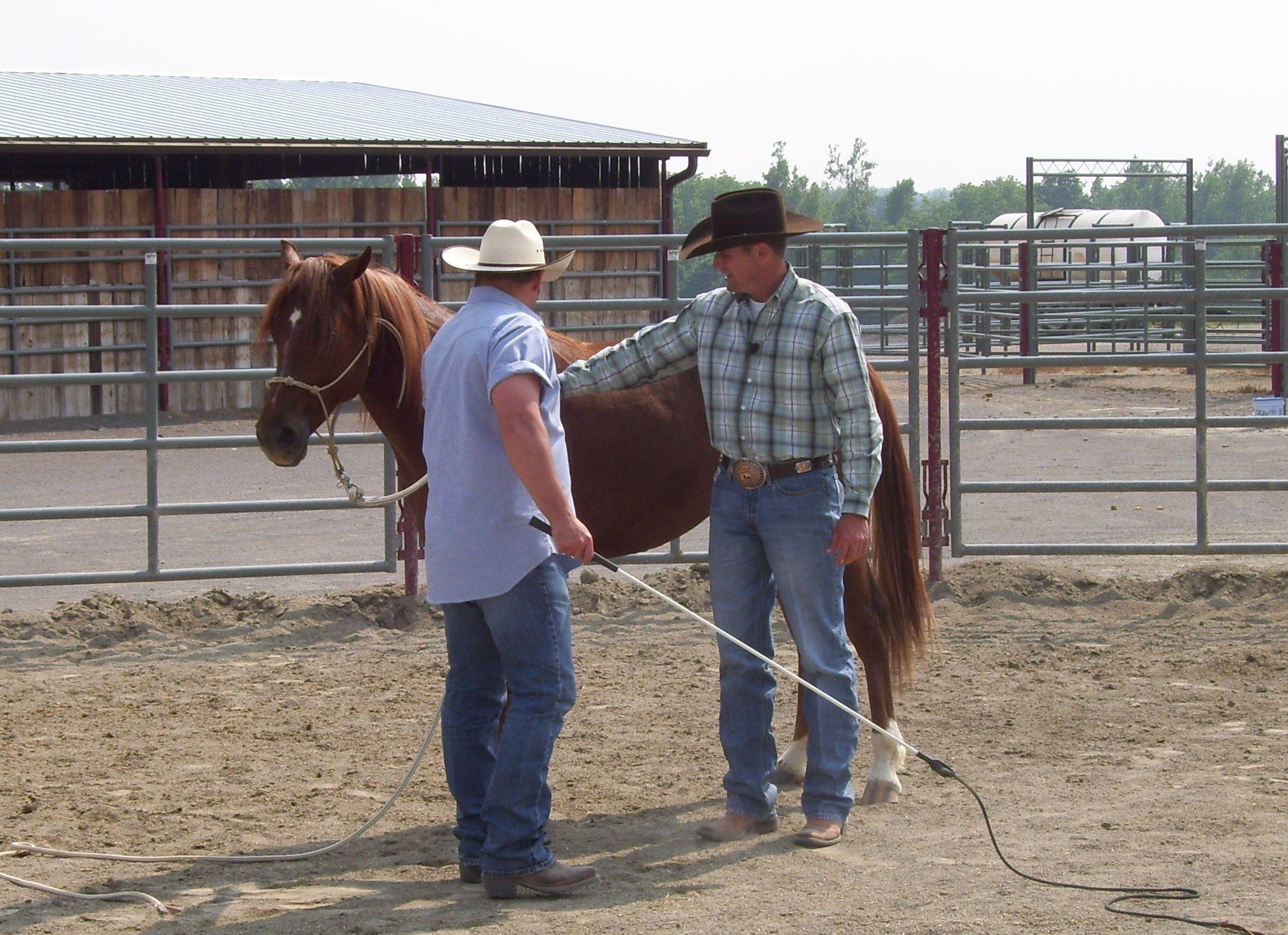 Pin on Horse Training