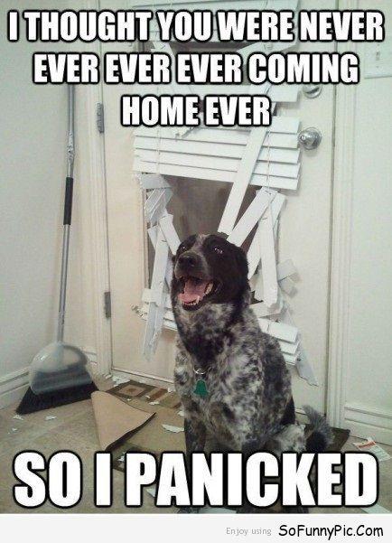 15 Funny Dog Memes For Dog Lovers Funny Dog Pictures Funny Dog Memes Funny Animal Pictures