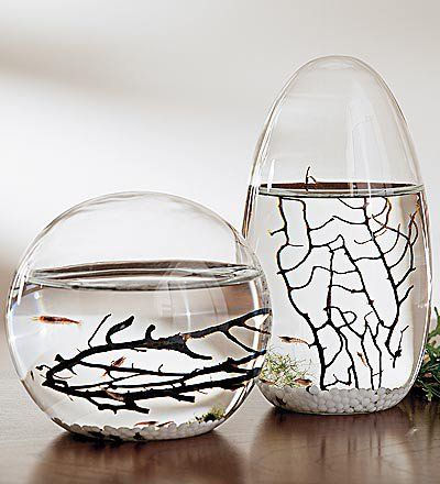 Ecosphere Pod With Self Sustaining Sea Ecosystem Wind And Weather On Wanelo With Images Ecosphere Pods Nautical Decor