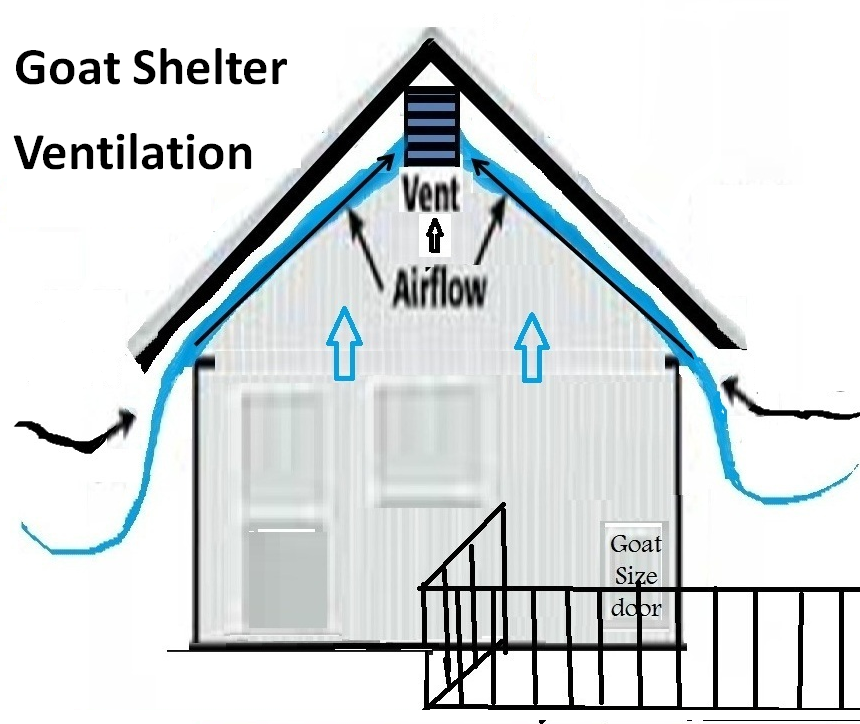 Inadequate Ventilation In Goat Shelters And Barns Is Often A Leading Cause Of Coughing Respiratory Illnesses In Goats During Wi Goat Shelter Goats Goat House