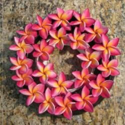 Two Lei Rings Filled With Frangipani Flowers Plumeria Fragrant Flowers Bloom