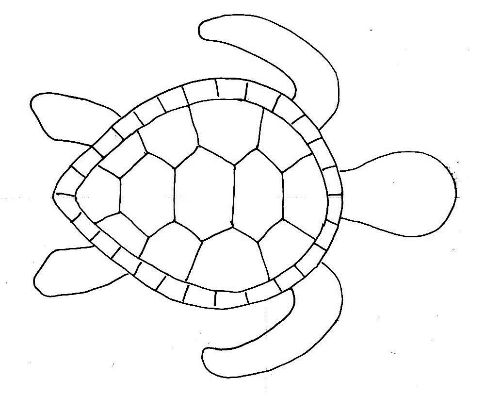 Lively image with regard to turtle templates printable