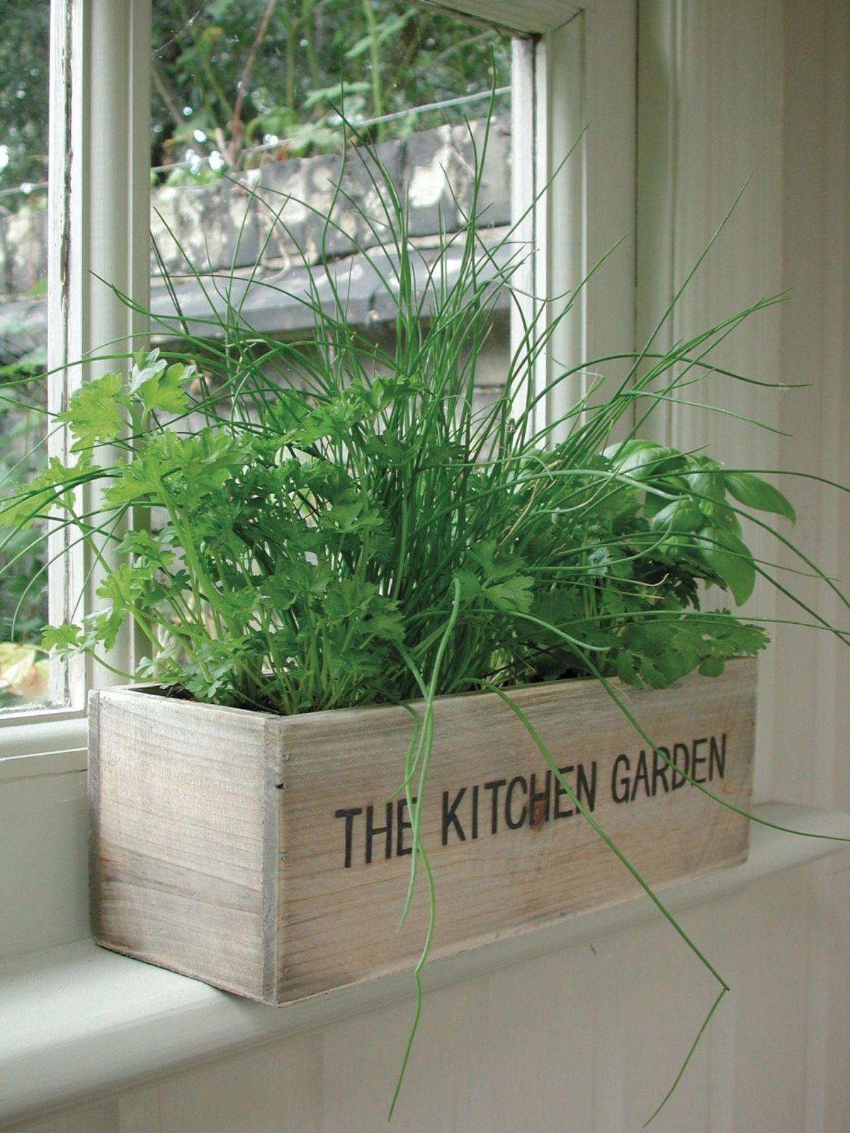 Indoor Herb Kit Garden Wooden Pots Herbs Seeds Kitchen Grow Your Own