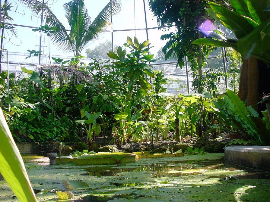 Botanical Garden Botanischer Garten Zurich