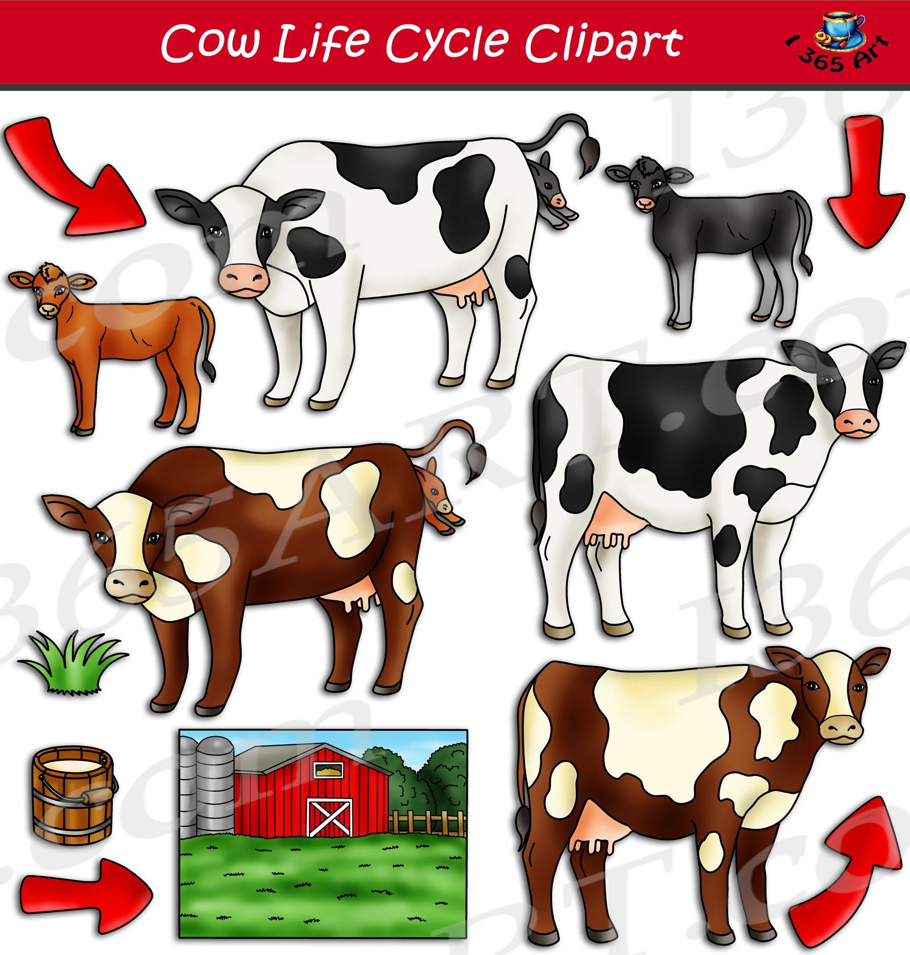 Cow Life Cycle Clipart Set Download Clipart 4 School Life Cycles Clip Art Cow [ 1890 x 1800 Pixel ]