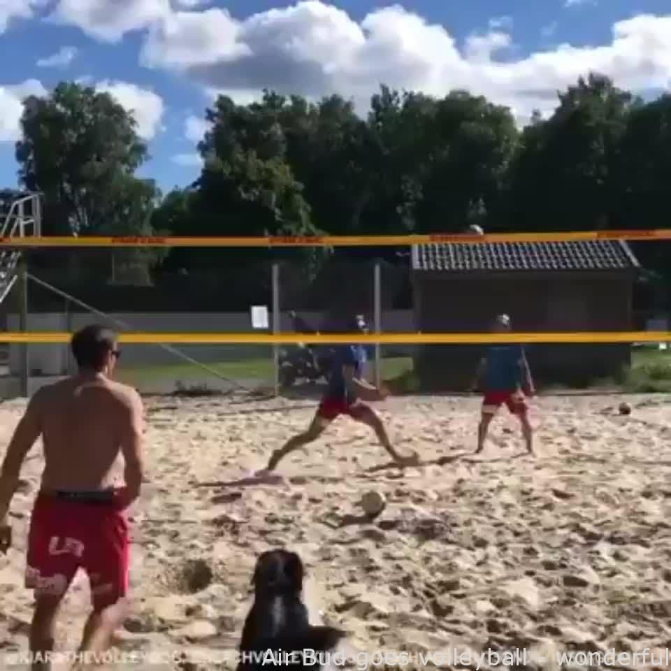 Air Bud Goes Volleyball Wonderful Gifs In 2020 Funny Animals Funny Animal Videos Cute Dogs