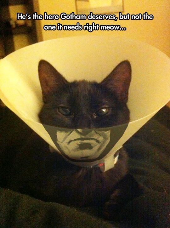 The Cone Of Shame Rises - Cat memes - kitty cat humor funny joke gato chat captions feline laugh photo