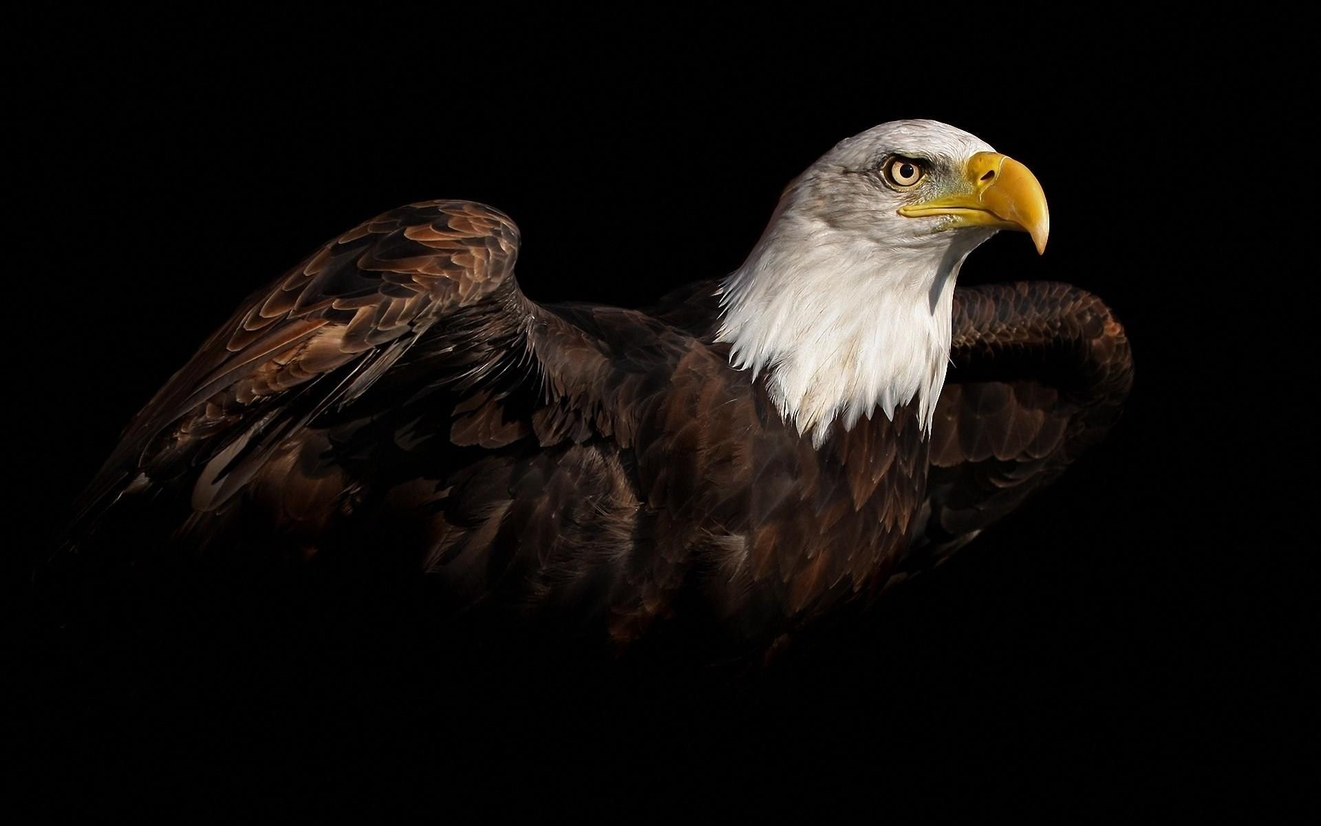 awesome moving 3d wallpaper | view eagle awesome bird hd wallpaper