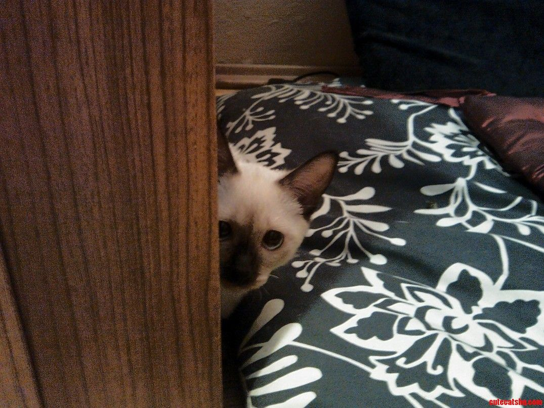 A Bit Shy In A New Home - http://cutecatshq.com/cats/a-bit-shy-in-a-new-home/