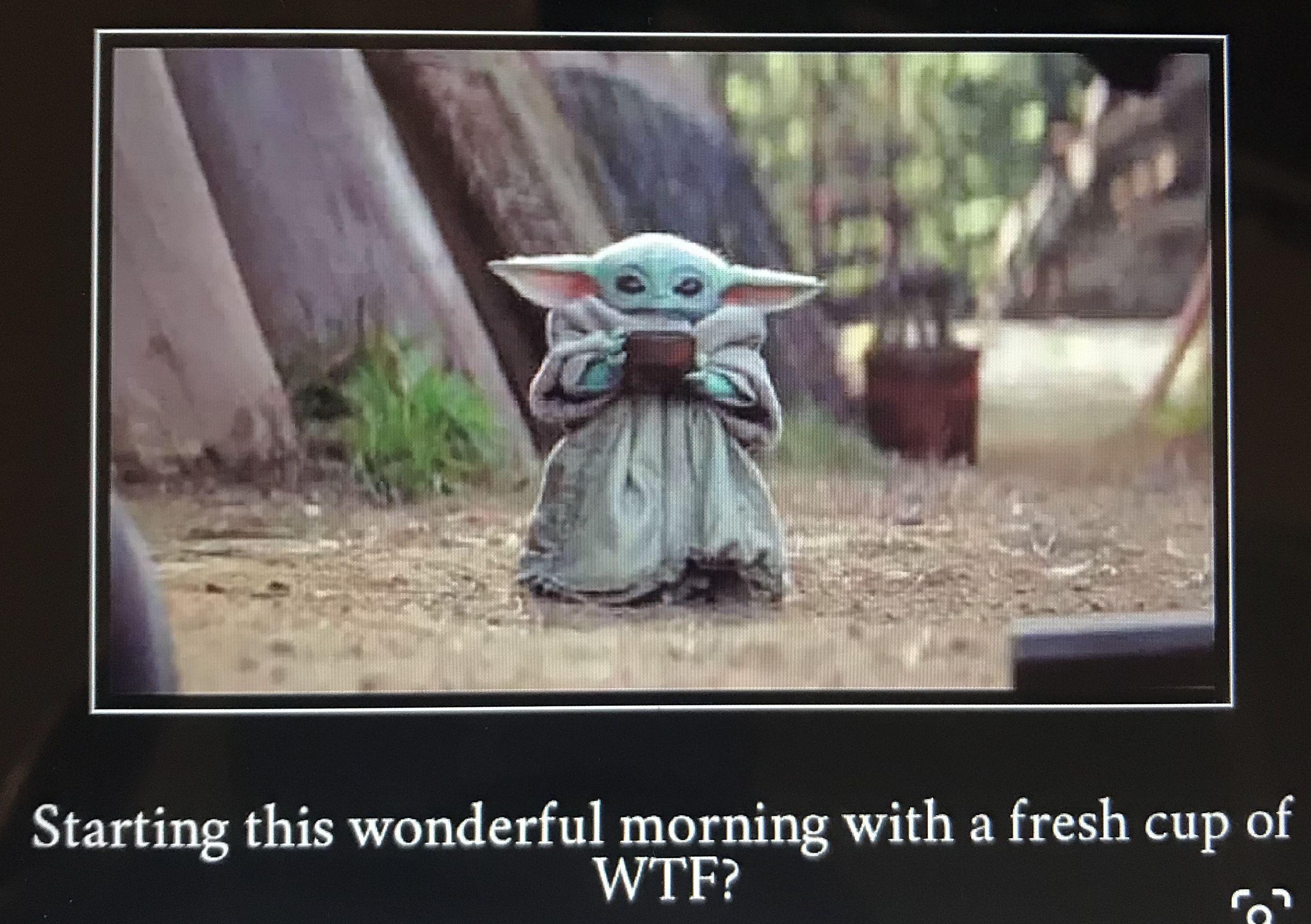 Baby Yoda Morning Cup Wtf Yoda Meme Animal Memes Funny Animal Memes