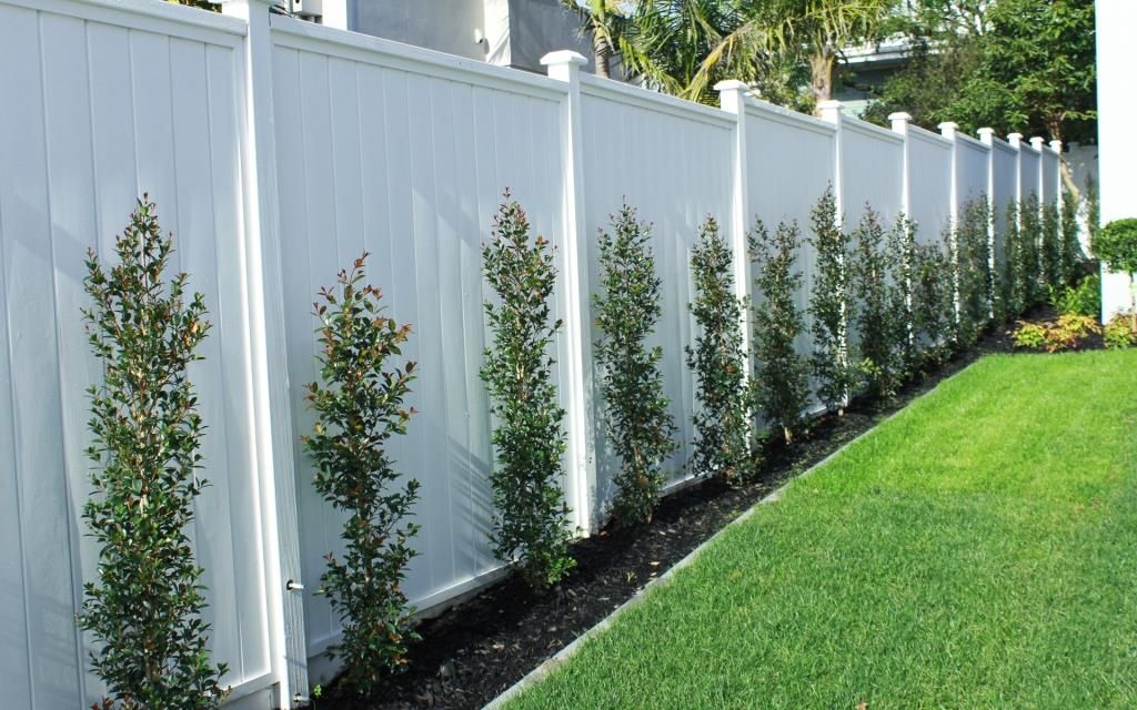 shiplap fence and eugenia hedge